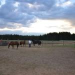 Konie w kopli