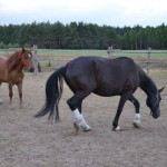 Konie: Tina i Fortuna
