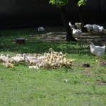 Zwierzęta w gospodarstwie obok